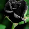 blackrose9027