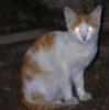 creepy, evil, Stargate, Goa'uld Cat