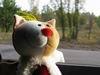 catzdaddy: pic#114008128