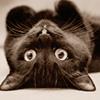 upsidedown kitty