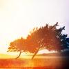 miogaiden userpic
