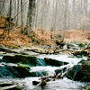 Spackle: winter: stream in the forest