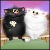 Коты влюблённые