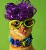 murrka: purple cat