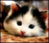 cat, kitty