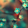 Fafers' Journal: Blue Flowers