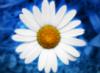 lewisross userpic