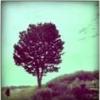 melancholydisco userpic