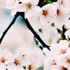 mayuminu userpic