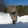 railcat userpic