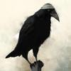 bandaged bird