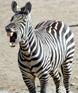 zebra_iz_haosa userpic