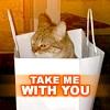 Hangbag Cat