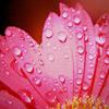random pink flower