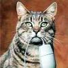 2BBornot2BB: kitty