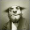 мистер кот