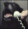 dog, phone