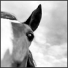 katie_quidditch :: Horse eye