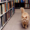 sharp2799: cat 'n books