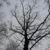 oldschool_man userpic