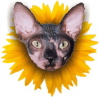 hairlesscat userpic