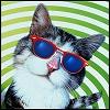 tequila_cat