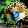 Ice: Animals// Philippine Eagle - startled