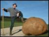 general potato