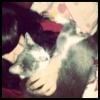 meowwzie userpic