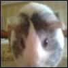ganelis userpic