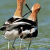 birds: pals