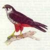 karshachok userpic