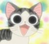 cheese cat; cute