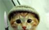 katever userpic