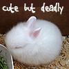 cindy: plot bunny