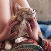 cat: mur-mur cat