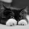 cat: Atos cat