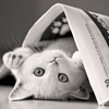cat: white cat & newspaper