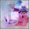Cutie puppies 02