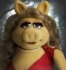 Свинская свинка