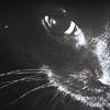 charismatic_rai: katty