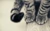 le_chat_frise