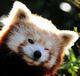 Сергей: Firefox морда