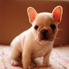 Sheri: BABY BULLDOG WITH PINK GLASSES BY inspir