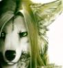 grifter_t_wolf