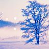 Stephanie: Winter - tree