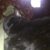 Kitty Cuteness
