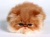 циничный сисадмин: cat