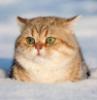 Ганзя: кот