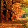 ivorysilk: Fall forest scene